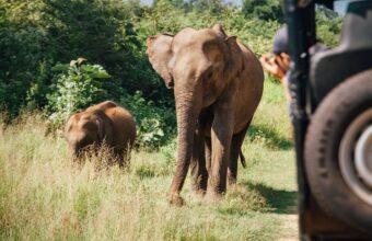 Highlights of Sri Lanka Luxury Tour