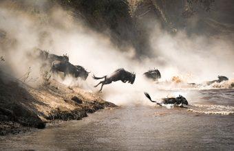 Kenya & Tanzania Migration Safari
