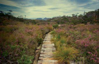 Freycinet Guided Bushwalk