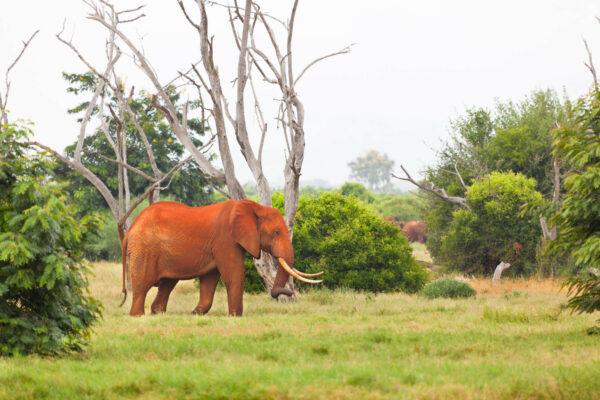 Tsavo East & West National Parks
