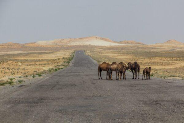 Visiting The Karakum Desert