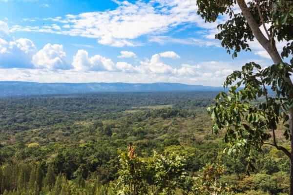Kakamega Forest Reserve
