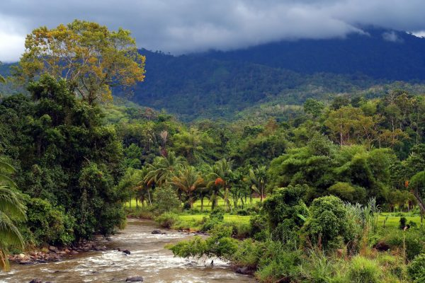 Where To See Orangutans In Sumatra