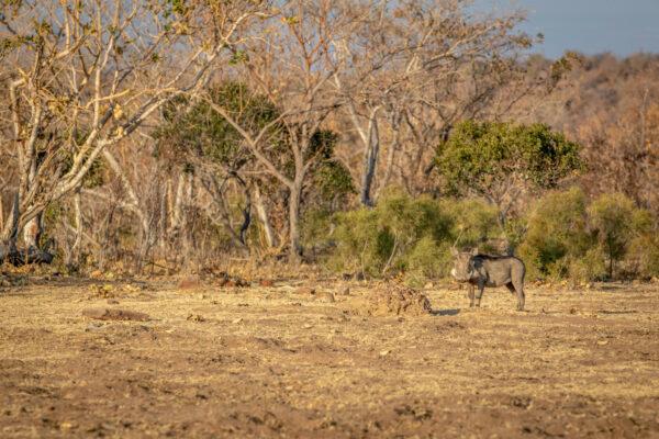 Pumba Game Reserve