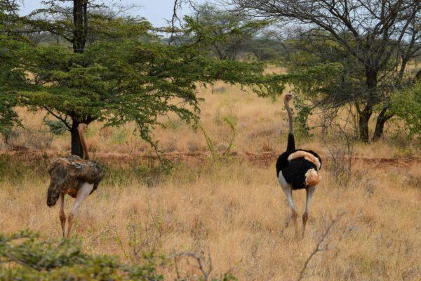 Safari In Meru National Park