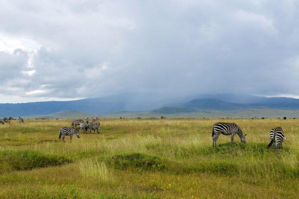 Where Is The Wildebeest Migration In December?