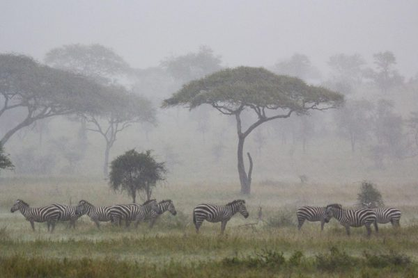 Where Is The Wildebeest Migration In November?