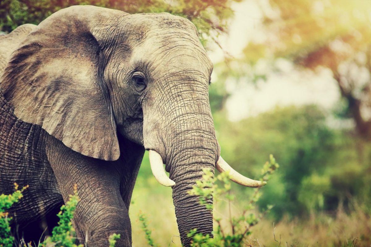 SA_sabisands_elephant