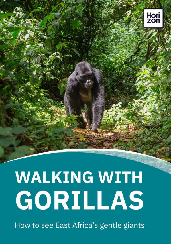Walking With Gorillas
