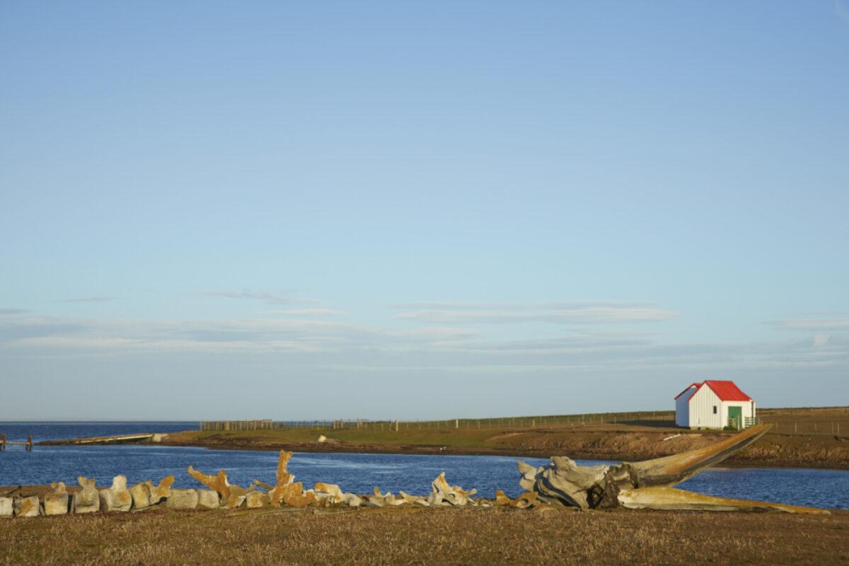 Falklands-Islands_Bleaker-Island