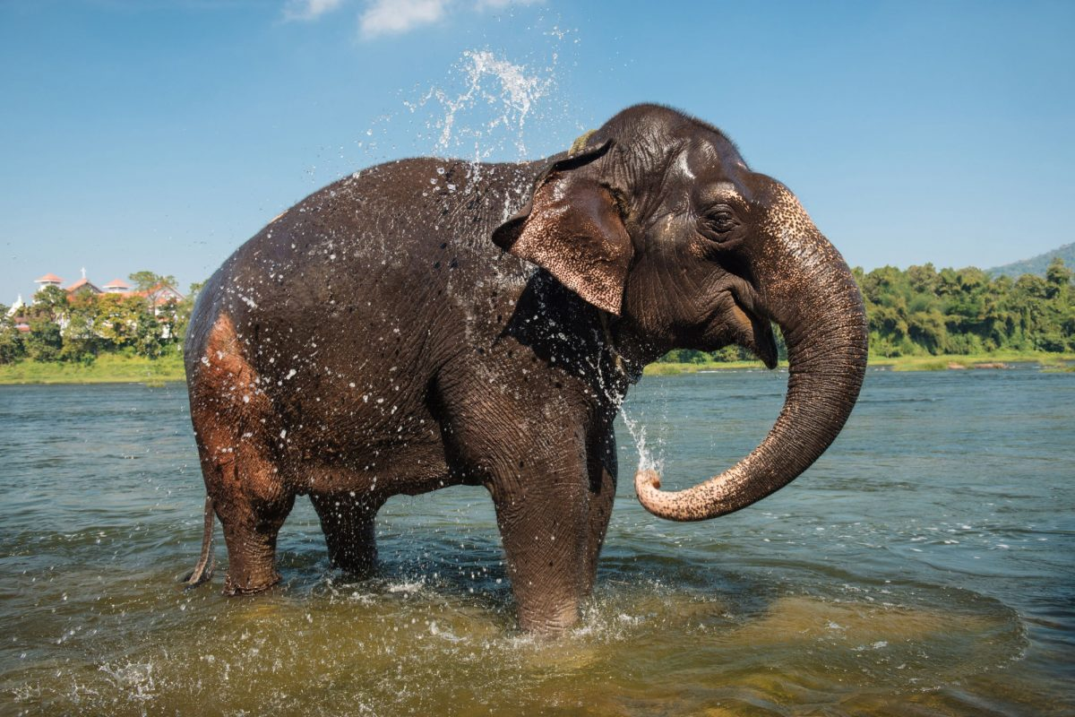 India periyar National Park Elephant