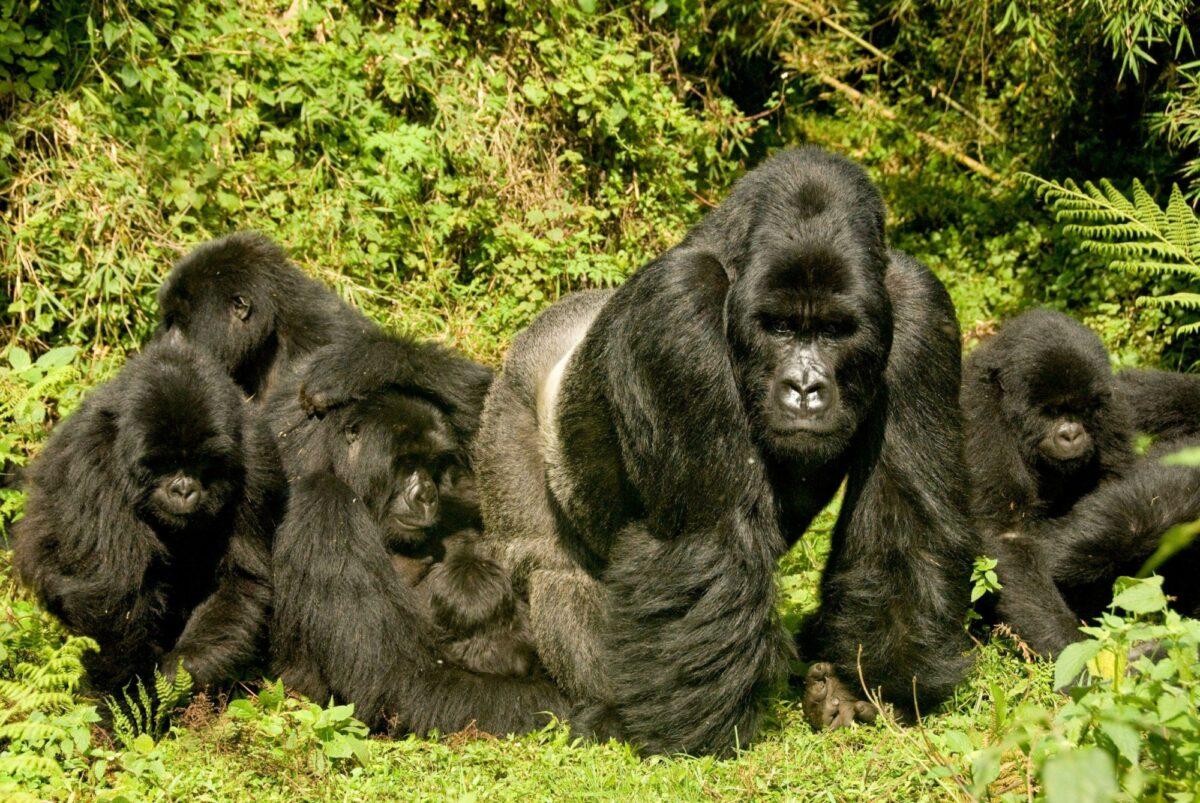 Rwanda Volcanoes National Park2