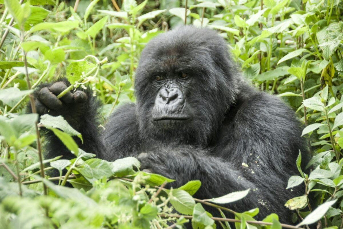 Rwanda Volcanoes National Park3