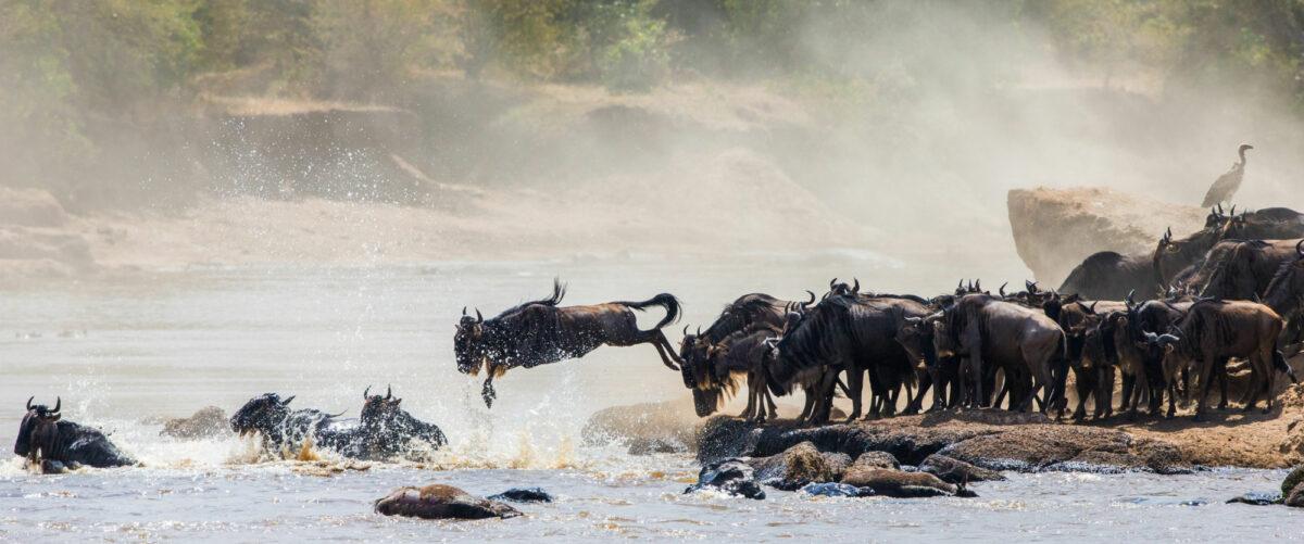 Tanzania-wildebeest