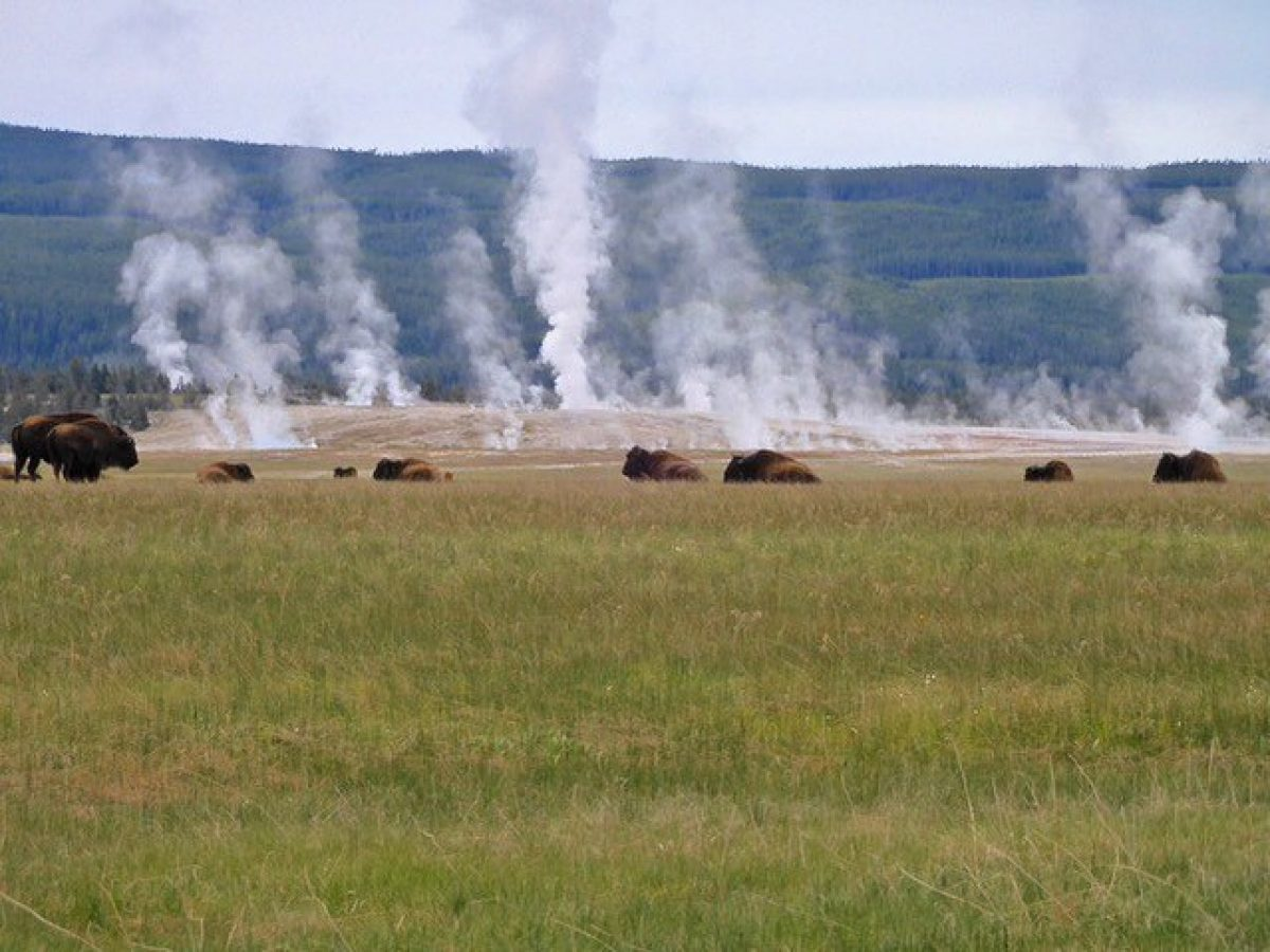 USA Yellowstone Adventure Tours 3