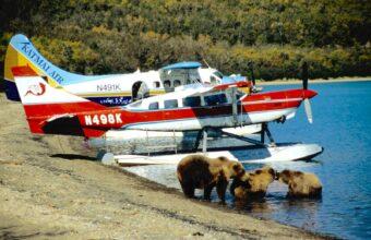 Bear Trekking in Katmai National Park