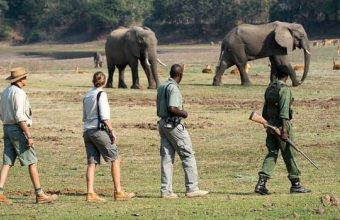 Explore South Luangwa Bush Camping