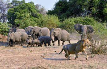 Zambia's Animal Kingdom