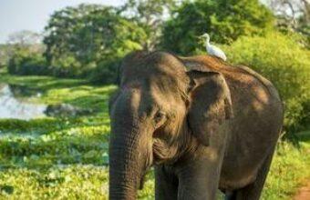 Big Mammals of Sri Lanka