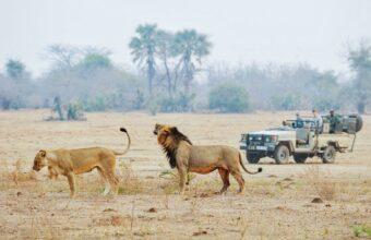 The Best Of Lower Zambezi