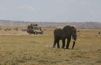 Highlights Of Kenya Private Safari