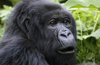 8 Days Epic Rwanda Safari Adventure