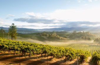 North Coast Redwoods and Wine Country