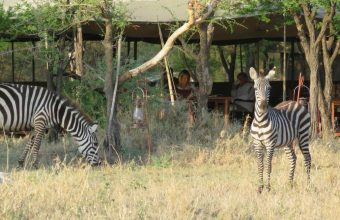 Serengeti North Wilderness Camp Fly in Safari