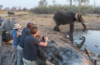 The Fantastic Family Safari