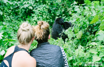 Private Uganda Safari