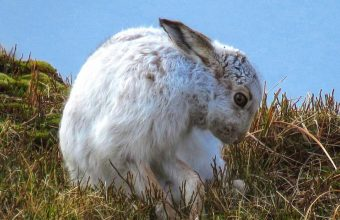 Mountain Hares Discovery Walk